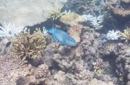 leica-x-u-113-unterwasser-20
