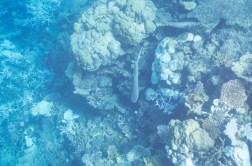 leica-x-u-113-unterwasser-6