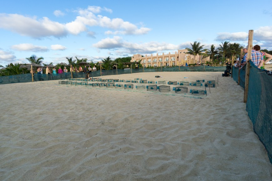 Schildkrötenstation am Strand