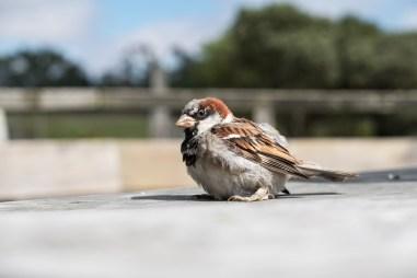 Orana Wildlife Park - Vogel