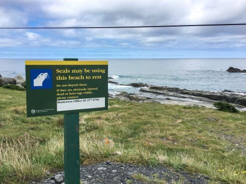 Cape Palliser Robbenkolonie, Neuseeland