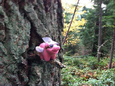 Pigs in trees