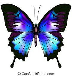 Butterfly Stock Illustrations 142035 Butterfly Clip Art