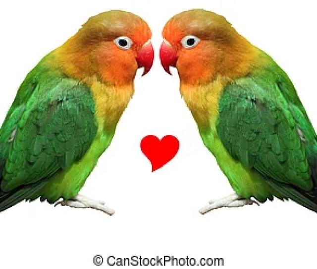 Pair Of Lovebirds Stock Photographsby Muha047 1917 Loving Bird Agapornis Fischeri Two Colored Bird