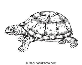 graver tortue dessiner encre