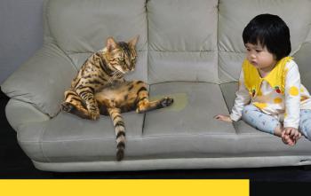 養寵物、育嬰必看,如果皮沙發有尿騷味怎麼辦,第一步要這樣做!