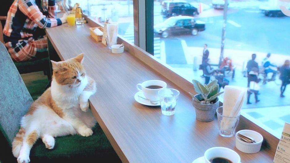 kedi ve kahve ile ilgili görsel sonucu