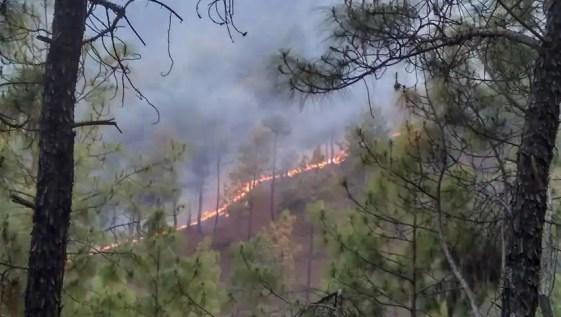 जंगलों में लगी आग से झुलसे पहाड़, हजारों हेक्टेयर फसल स्वाहा, किसानों को भारी नुकसान | Zee Business Hindi