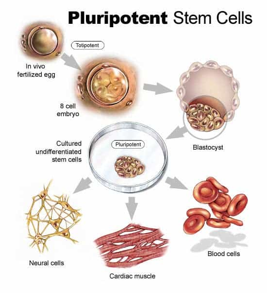 Massive database of of 1,500 stem cell lines derived from ...