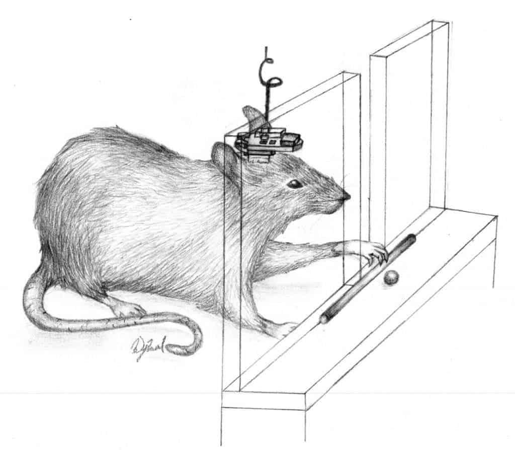 Brain Computer Interface Restores Brain Connectivity In