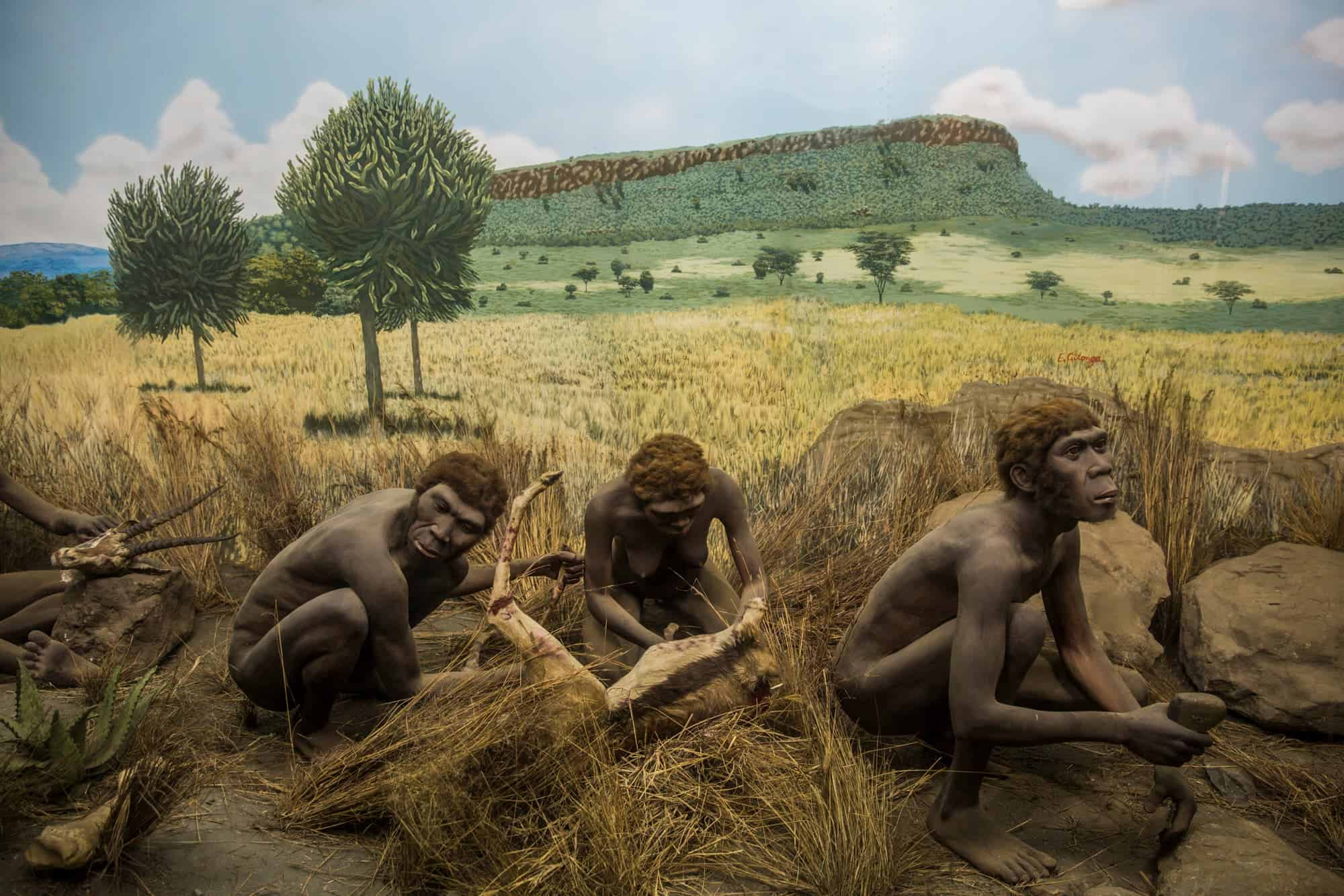 Evidence Of Early Innovation Pushes Back Human