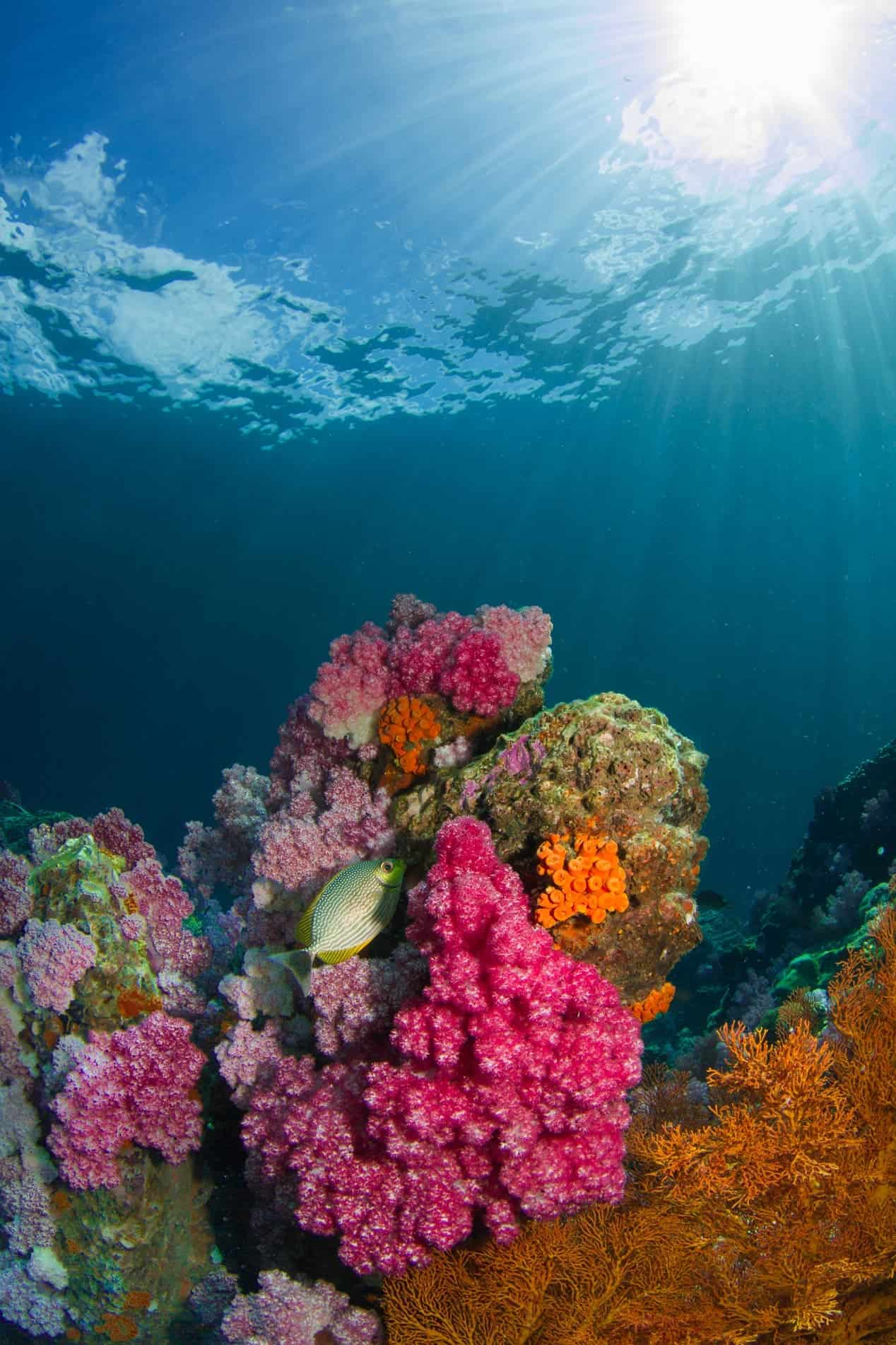 Coral Havens Might Bring Worldwide Hope For Reefs