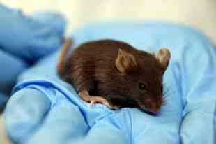 Scientists rerun paralyzed mice with breakthrough treatment