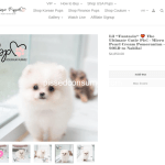 46 Boutique Teacup Puppies Reviews And Complaints Pissed Consumer