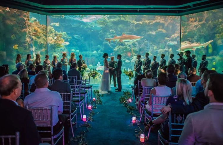 aquarium wedding venue, Happily Ever Borrowed