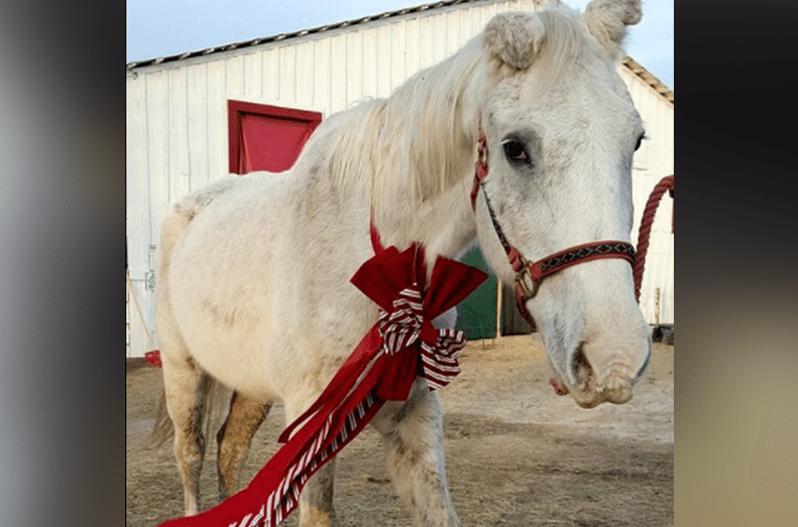 Texas Donkey Rescue