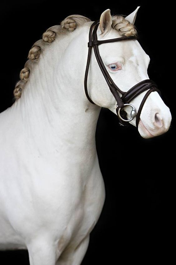 Horse Braids 10 Braided Manes Every Equestrian Will Envy