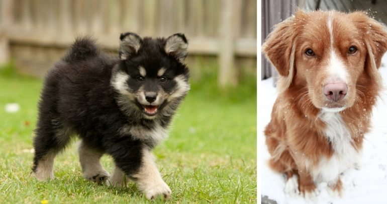 Adorable Puppy Pictures That Will Make   Readers Digest
