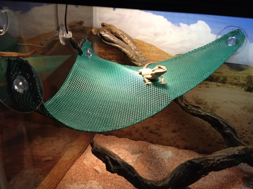 Diy Reptile Habitat Additions That Will Save Your Wallet