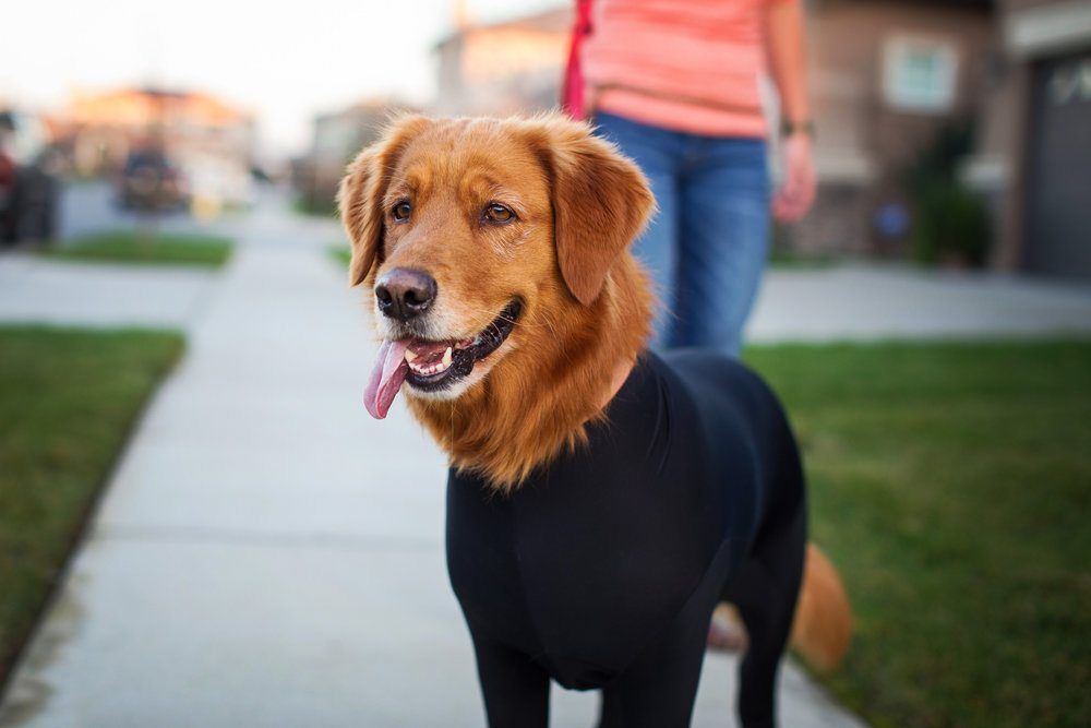 The Shed Defender Is An Eco Friendly Leotard For Your Dog