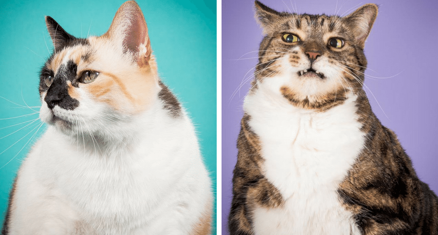 This Photographer Takes Pictures Of Fat Cats Because Big