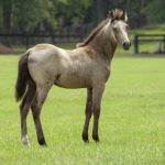 20 Most Popular Horse Breeds In The World