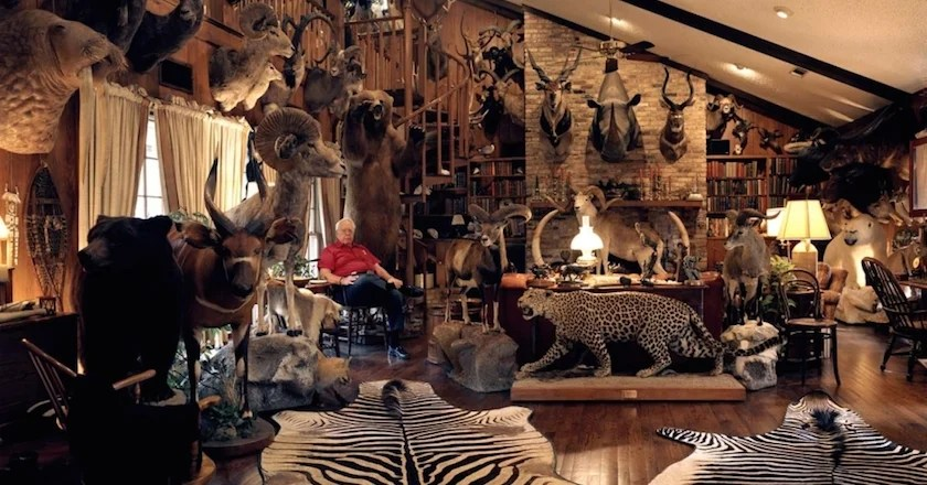 Pictures Safari Themed Living Rooms