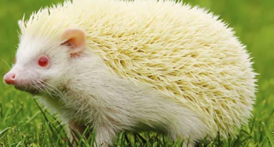 5 Unusual Albino Animal Facts