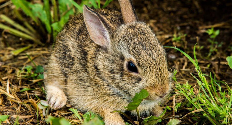 Image result for rabbits bunnies