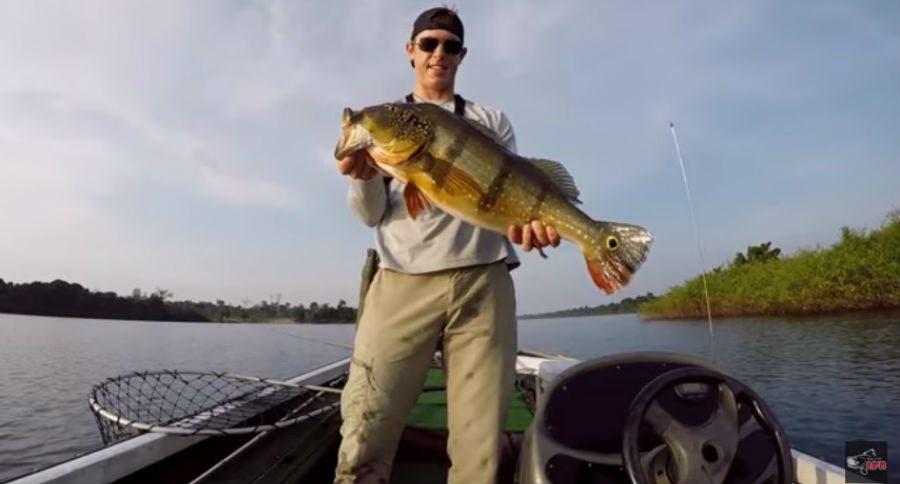 Video Lake Fork Guy Lands 16 Pound Peacock Bass