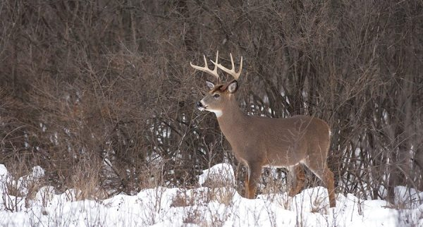 6 Successful Hunting Tactics for Whitetails in December