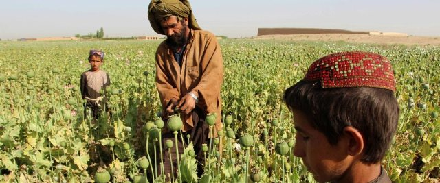 USAID Brags About Helping Farmer Starting Pomegranate Orchard, Shows Photo Of Him In Poppy Field