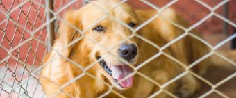 Members Of Congress Introduce Bill To Limit Veterans Affairs Dog Experiments