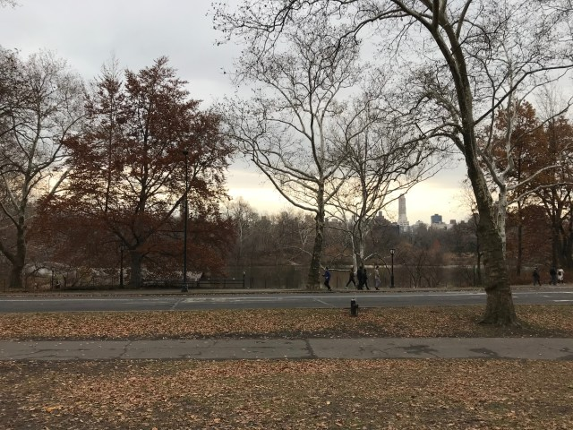 A close-up of the view of Central Park from Ilene Sackler Lefcourt's building. (DCNF/Ethan Barton)