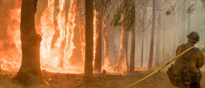 Firefighter fight fire near torching trees as wildfire burns near Yosemite National Park in this US Forest Service photo released on social media from California, U.S., August 6, 2018. Courtesy USFS/Yosemite National Park/Handout via REUTERS