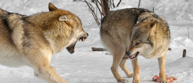 Report: Feds Are Lowballing The Cost Of Protecting Endangered Species By BILLIONS Of Dollars