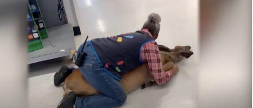 WATCH:Employee Bear Hugs Deer That Gained Entry Into Walmart