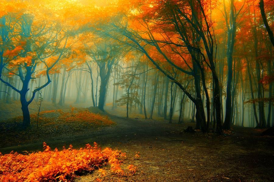 Parlak sonbahar orman.