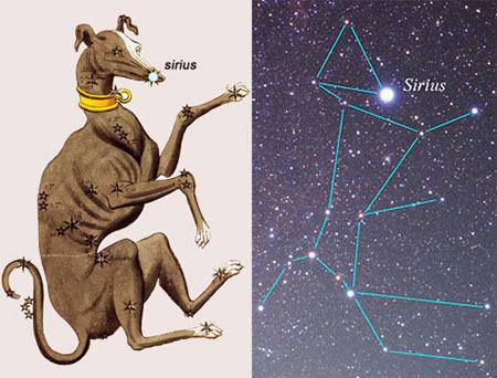 Звезда Сириус - в каком созвездии она находится?