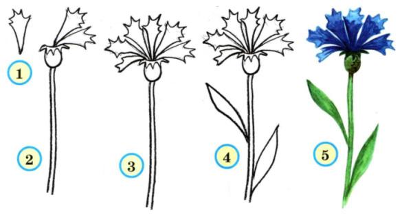 Как нарисовать тюльпан поэтапно красками - Как нарисовать ...