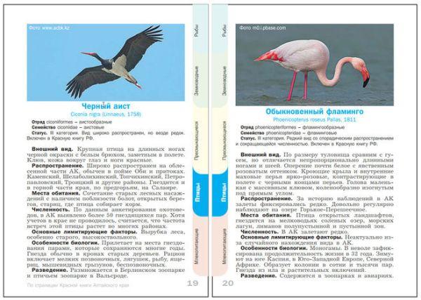 Где найти описание животных и растений из Красной книги ...
