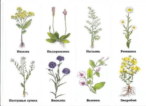 Чем луговые травы отличаются от растений пустыни и леса?