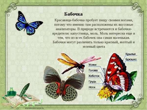 Рассказ про бабочку для начальной школы в картинках, где ...