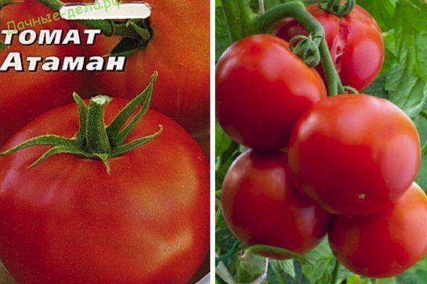Томат сорта Атаман кто сажал, описание, отзывы и фото?