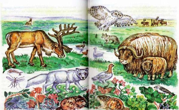 Окружающий мир 4 класс Какие есть растения и животные ...
