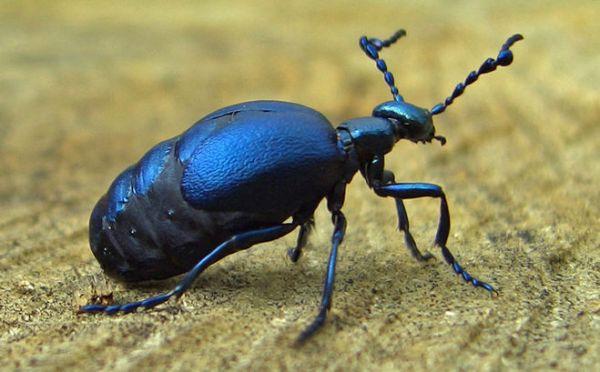 Какие бывают животные синего цвета?