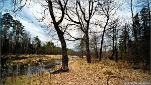Какие изменения в живой природе происходят осенью?