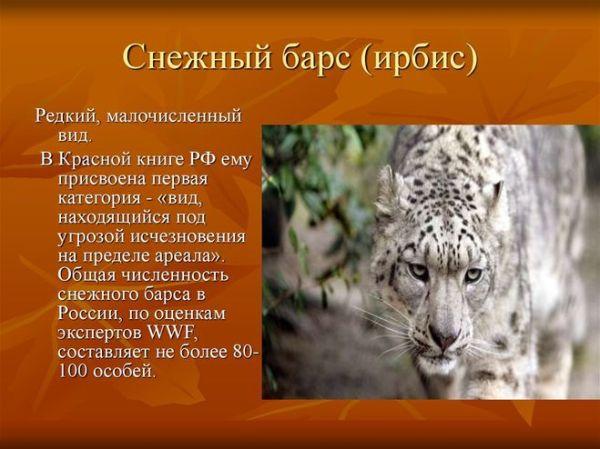 Сообщение об одном из видов животных из Красной книги ...