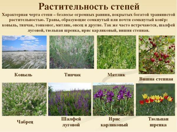 Какие животные и растения обитают в степи?