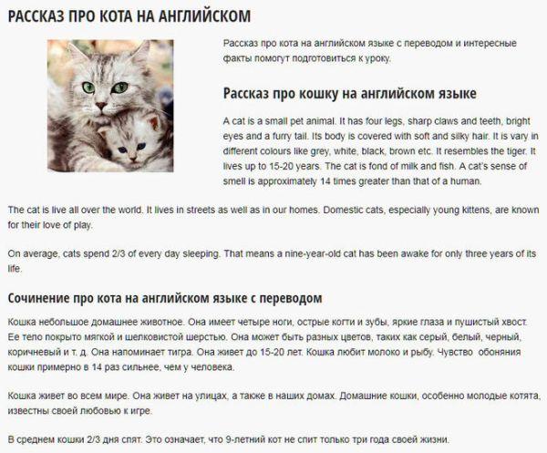 Как написать рассказ про кота на английском языке с переводом?